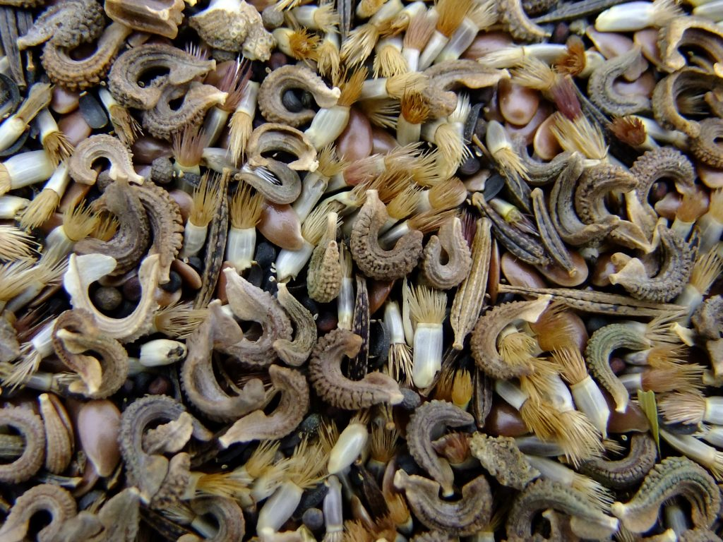Close up shot of wildflower seeds