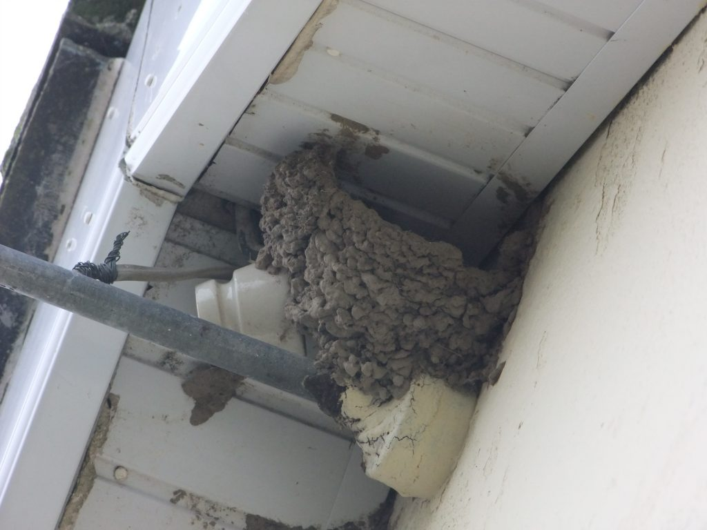 remainder of house martin nest