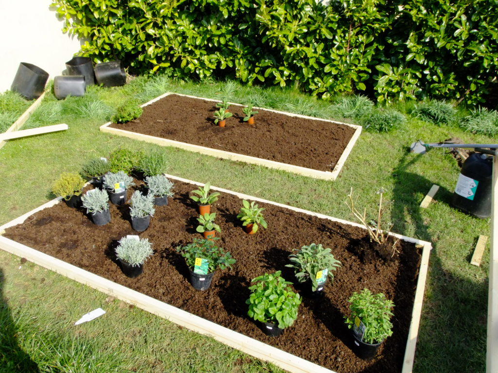 plants & herbs for planting in beds